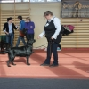flat-coated-retriever-hodowla-flaty-wystawa-bydgoszcz-1