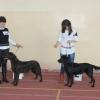 wystawa-psow-bydgoszcz-2015-Tara (2)