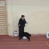 wystawa-psow-bydgoszcz-2015-viki (2)
